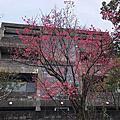 臺北花卉試驗中心