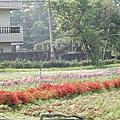 富田花田農場