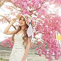 台灣之美-浪漫櫻花