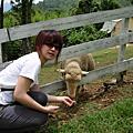 綠光森林_20080629