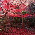 2014_11~12 日本京都賞楓