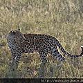 2015_02 南非 South Africa-Wild Life