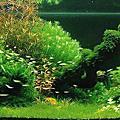 我的水草造景缸