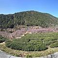武陵農場 2011/02/06-2011/02/08