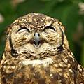 可愛動物搞笑圖片