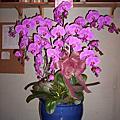 奇緣花園花藝坊蘭花照片