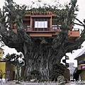 美麗的樹屋照片