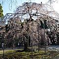 |東京/後樂園| 2013年的春天一開始~