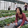 2009/2 白石湖草莓+碧湖