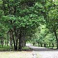 2009/5 宜蘭礁溪老爺+福山植物園