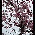 淡水-天元宮(080322)