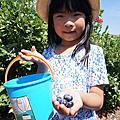 2017-0603 採藍莓初體驗
