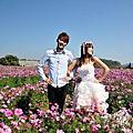 我藏了一年的自拍婚紗~走馬瀨 九族櫻花拍~