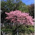 2011年陽明山花季