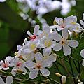 2013-04-桐花祭