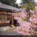 101-02-10新竹市-新竹公園-櫻花