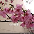 101-02-16新竹公園櫻花季