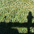 2008/12/21 奮起湖