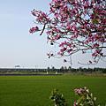 2009/03/15 官田小路
