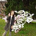 05~台大杜鵑花季