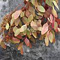 切花cut flower-leaf