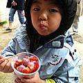 20120108 北埔 大湖草莓 採採樂
