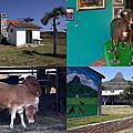 第0644篇[屏東恆春]墾丁牧場合作社/農委會畜產試驗所/山羊館X影像導覽 Pingtung Kenting Ranch X Taiwan tourist attractions image navigation