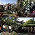 第0659篇[彰化大村]劍門生態花果園/童年的樹屋/斗笠樹屋X影像導覽 Changhua Jianmen Fruit Farm X Taiwan tourist attractions image navigation