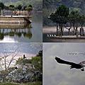 第0690篇[桃園大溪]頭寮大池賞鳥/水中土地公廟/大艽芎古道/大艽宮X影像導覽 Taoyuan Over Water Tudigong Temple / Fu-de Temple X Taiwan tourist attractions image navigation