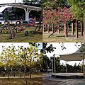 第0782篇[嘉義大林]大林鎮運動公園/鎮立游泳池/大林火車站X影像導覽|Chiayi Dalin Sports Park X Taiwan tourist attractions image navigation