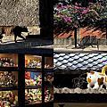 第0791篇[台南北區]321巷藝術聚落/郭柏川紀念館/日軍步兵第二聯隊官舍群(市定古蹟)X影像導覽|Tainan 321 Arts Village X Taiwan tourist attractions image navigation