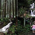 第0804篇[新竹關西]馬武督探索森林/虹橋、馬武督瀑布/元氣、楊梅、竹林、楓林步道X影像導覽|Hsinchu Discovery Forest X Taiwan tourist attractions image navigation