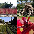 第0842篇[雲林斗六]糧莘有機庇護農場/食農教育園區X影像導覽|Yunlin Red Quinoa Farm X Taiwan tourist attractions image navigation