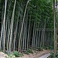 第0908篇[Japan Kyushu]Saga Takeo Shrine X Attraction image navigation|日本九州佐賀武雄神社/武雄の大楠(日本第六位巨木)X景點影像導覽