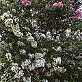 第0923篇[新竹新埔]普羅旺斯/廣源記圳蓄水池/飛龍池步道X影像導覽|Hsinchu Xinpu Provence Rose Garden X Taiwan tourist attractions image navigation