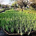 第1289篇[宜蘭員山]水生植物教育園區/員山公園/忠烈祠X台灣景點導覽|Yilan Yuanshan Aquatic Plant Education Park