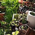 頂樓花園三月記錄
