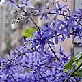 優雅的紫色花雨~~