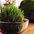 自製土司下午茶之綠蔓延