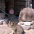 20080406日本九州賞櫻之旅Day5-黑川溫泉
