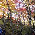 20101119嵐山賞楓