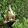 20080120北領地野生生物園區Territory Wildlife Park