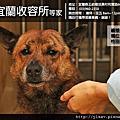 宜蘭縣動植物防疫所-2012/03/12(Sylvie Low拍攝)