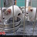 宜蘭縣動植物防疫所-2012/04/25(新增4/23~4/25新進貓狗)