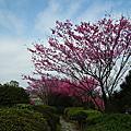 2011.03.05-2011.03.06東眼山、大湖公園、美麗華