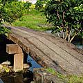 宜蘭景點-武暖石板橋20110618