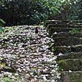 宜蘭景點-仁山植物園桐花20120429