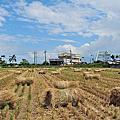 宜蘭景點-2011稻米情 。稻草香