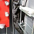 貓咪特輯(認養區與我的貓)