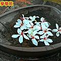 佑孳-油桐花與螢火蟲